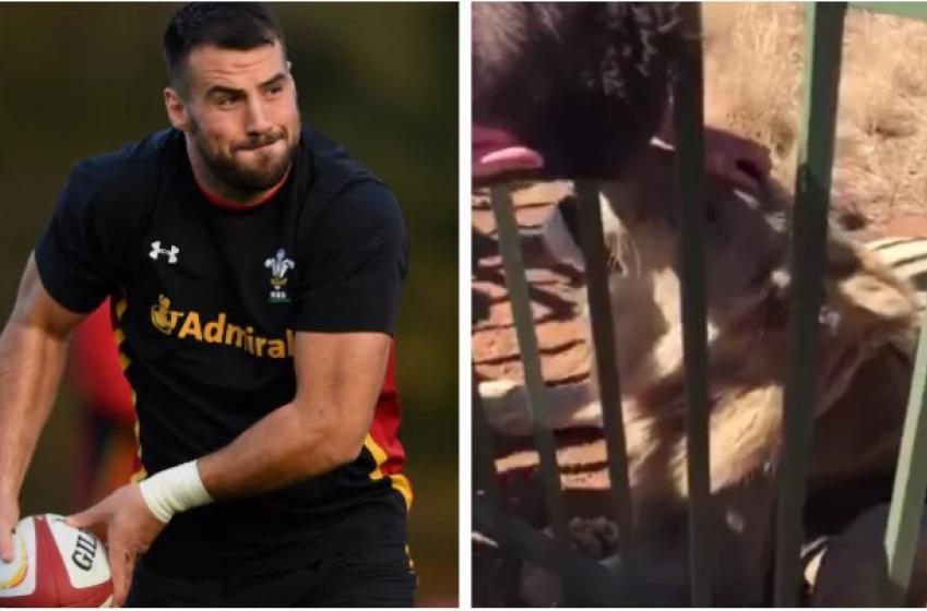 Un joueur vedette de rugby se film en flattant un lion... Pire erreur!